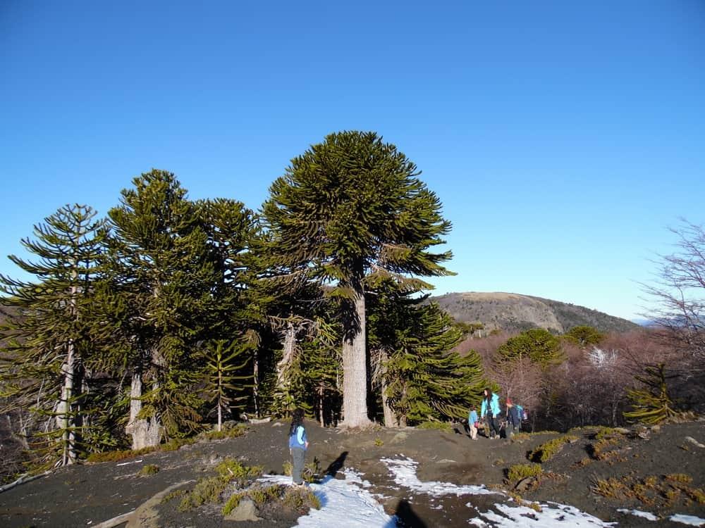 villarrica national park