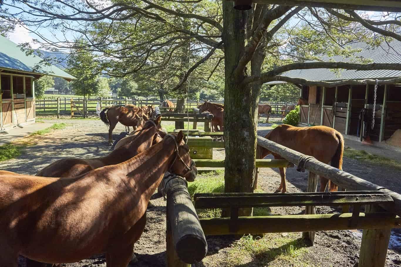 Día 4 - Rancho Santa Amalia