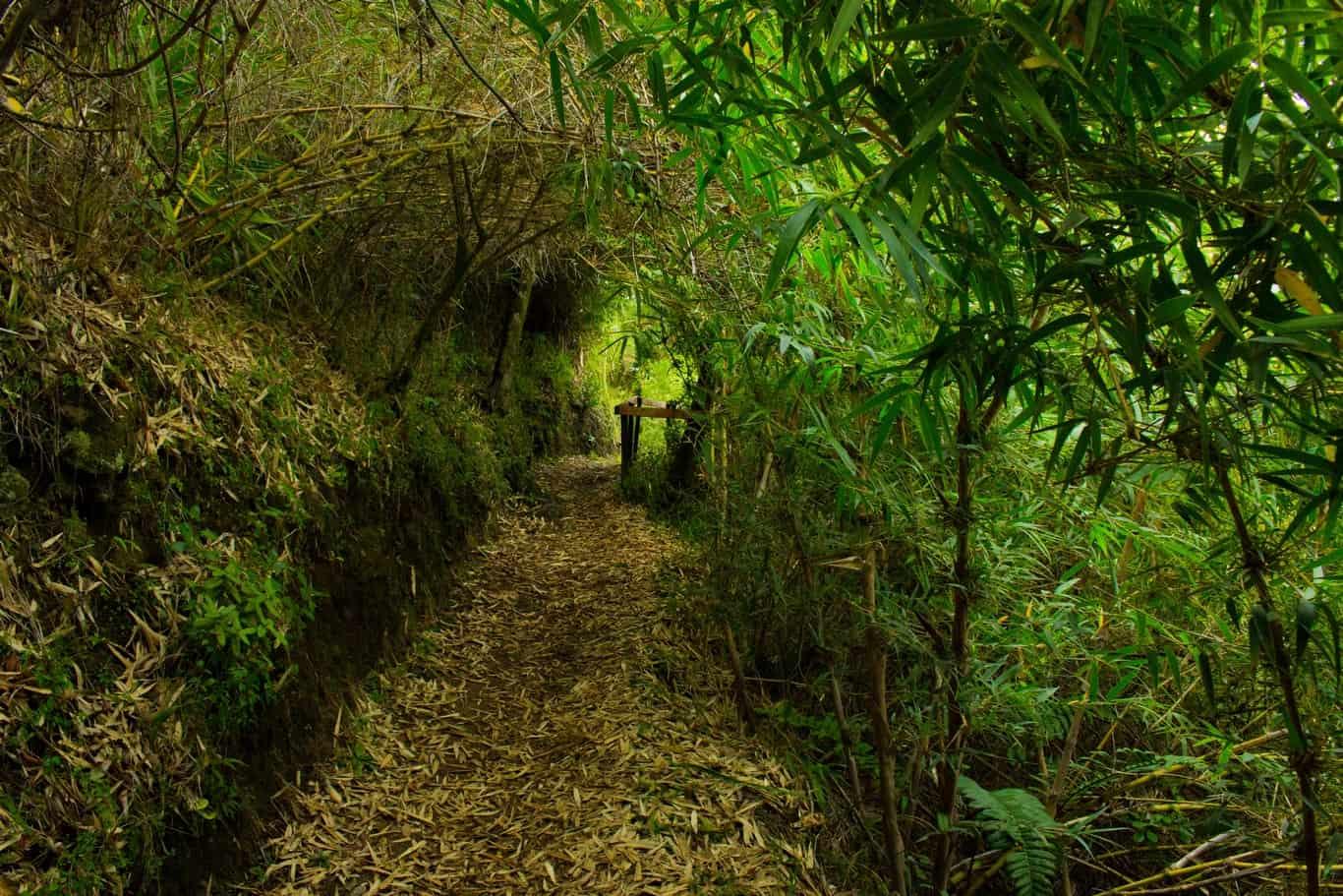Día 1 - Parque Urbano El Bosque