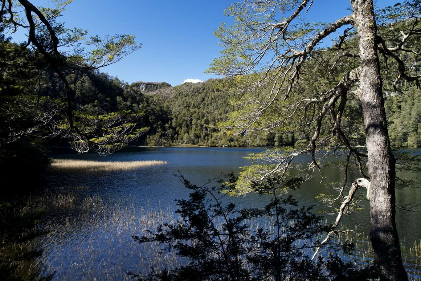 Día 4 - Laguna Pitreño
