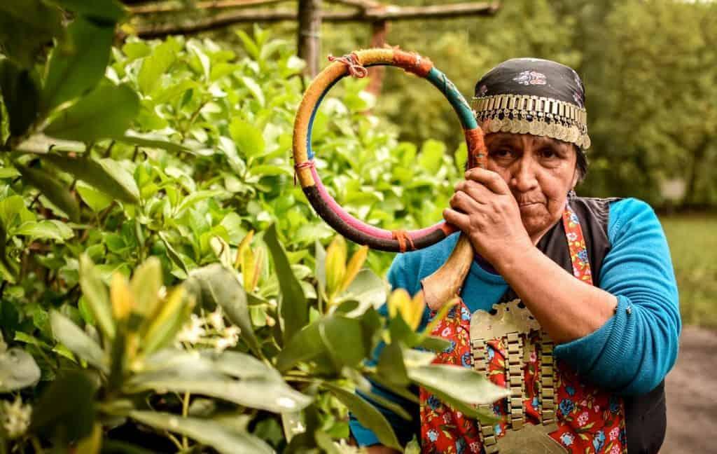 mapuche colipi