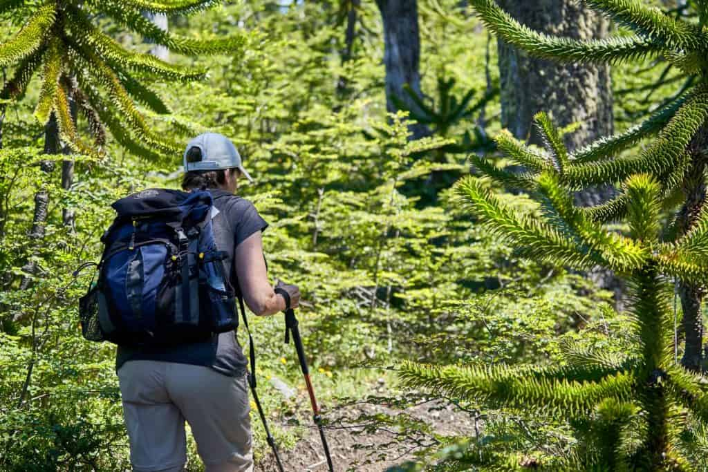 Pichillancahue Trail Hike