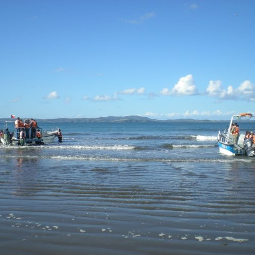 puñihuil chiloe island